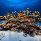2015_01_BARATHIEU_MAYOTTE_5737_original