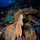 2015_01_BARATHIEU_MAYOTTE_6997_original