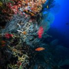 2015_01_BARATHIEU_MAYOTTE_8133_original