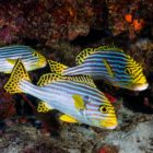 2015_10_BARATHIEU_MAYOTTE_2075_original (1)