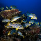 2015_10_BARATHIEU_Mayotte_2091_original